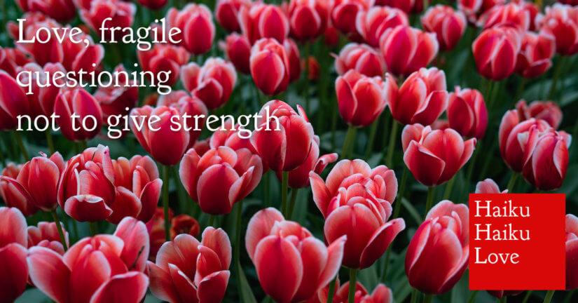 Love, fragile